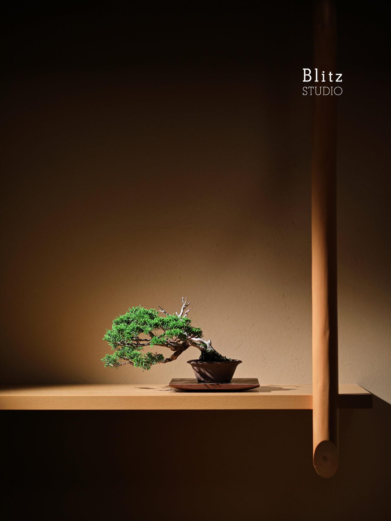 『盆栽家・島津拓哉』建築写真・竣工写真・インテリア写真19