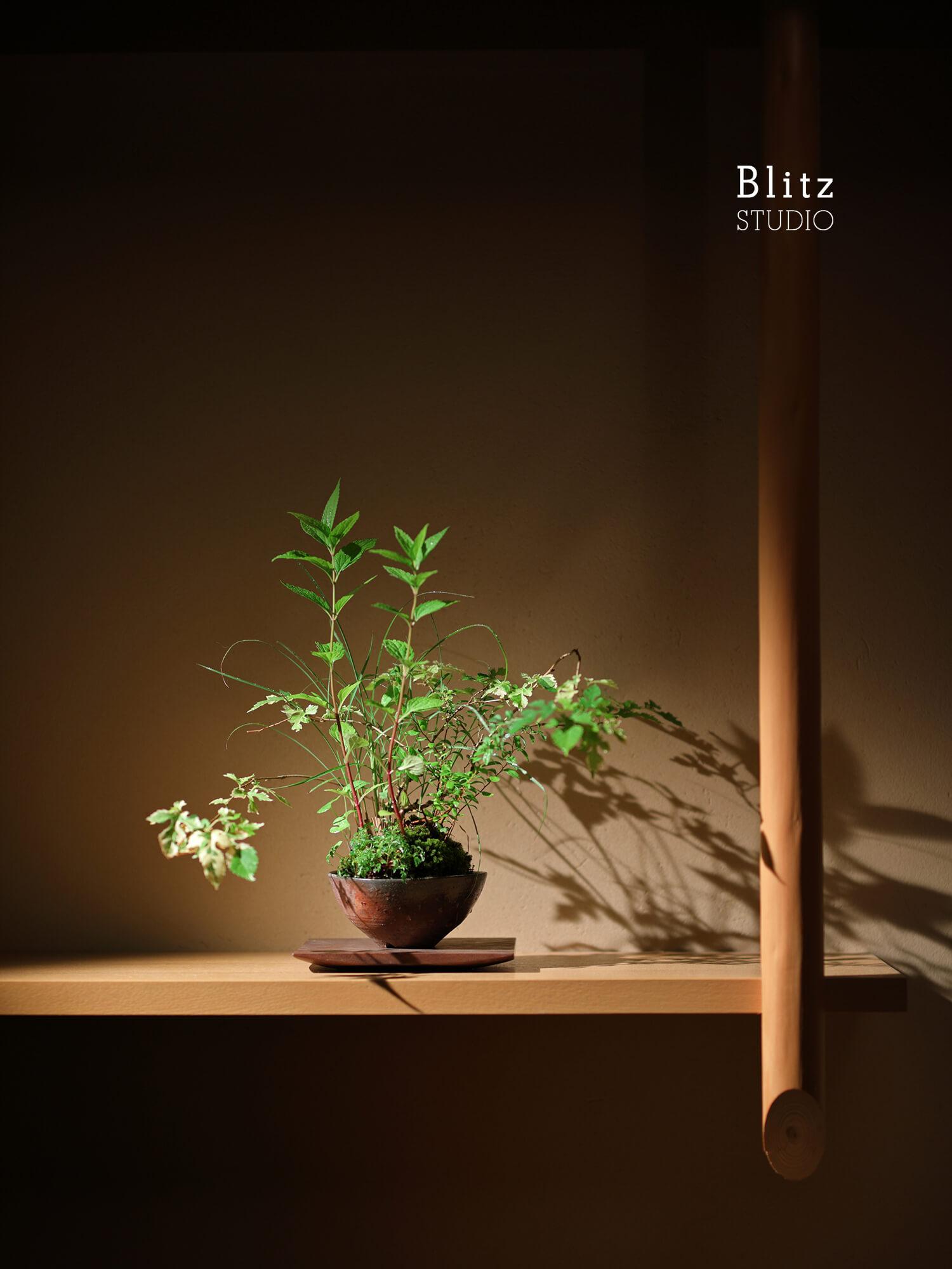 『盆栽家・島津拓哉』建築写真・竣工写真・インテリア写真20