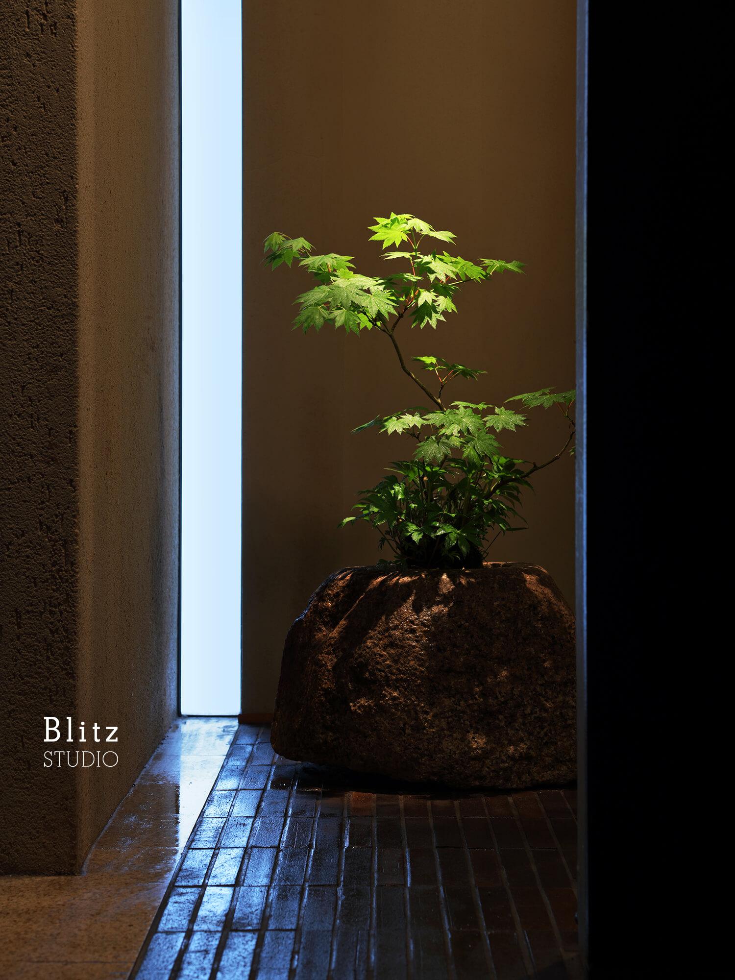 『盆栽家・島津拓哉』建築写真・竣工写真・インテリア写真12