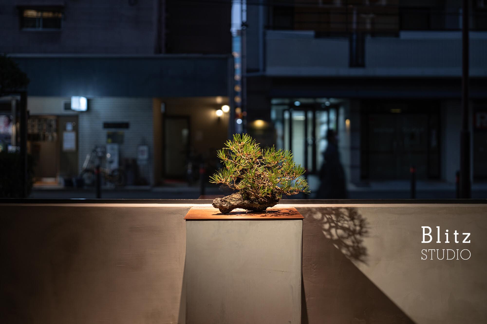 『盆栽家・島津拓哉 04』-美容室  La collectio-建築写真・竣工写真・インテリア写真3